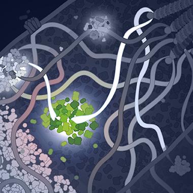 DNA repair site